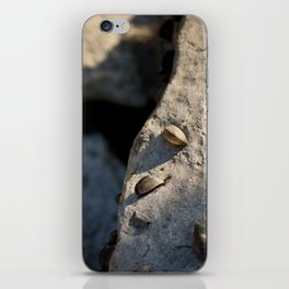 She Sells Sea Shells. iPhone Skin