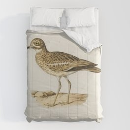 Eurasian stone curlew (burhinus oedicnemus) illustrated by the von Wright brothers Comforters