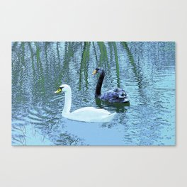 Black and White - Swans couple Canvas Print