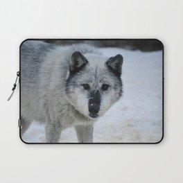 Lone wolf roams the Canadian Rockies Laptop Sleeve