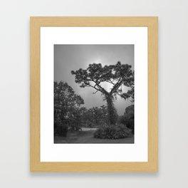 Park Scene Framed Art Print