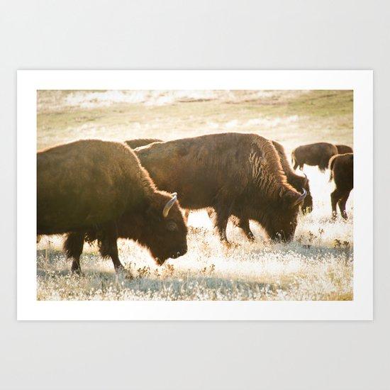In the herd by spadefoot