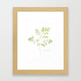 cilantro watercolor Framed Art Print