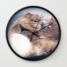 Sleepy Cygnet Wall Clock