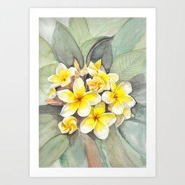 Frangipani White Art Print