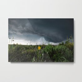 Stormflower - Sunflower and Storm in Texas Metal Print