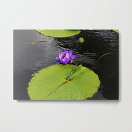 Dragonfly Dancing on a Lily Pad Metal Print
