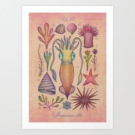 Aequoreus vita III / Marine life III Art Print