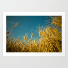 Yellow wheat Art Print