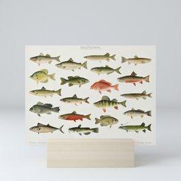 Illustrated North America Game Fish Identification Chart Mini Art Print