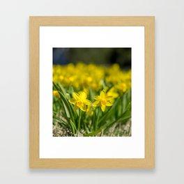 Tiny Daffodils Framed Art Print