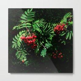 Rowan-berry Metal Print