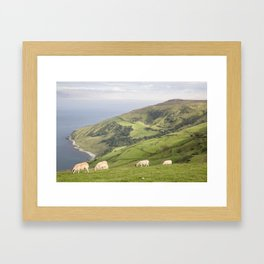 Sheep on Torr Head, County Antrim, Northern Ireland Framed Art Print
