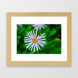 Blue daisy and a ladybird Framed Art Print