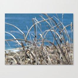 Summer beauties beside the blue Canvas Print