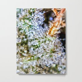 Gorilla Glue Trichomes Strain Indoor Hydro Private Reserve Buds Metal Print