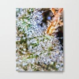 Gorilla Glue Trichomes Strain Indoor Hydro Private Reserve Buds Metal Print