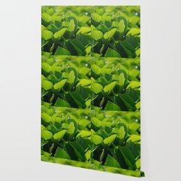Hydrangea foliage Wallpaper