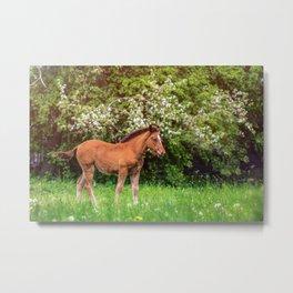 Nice little foal Metal Print