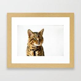 Ben the Bengal Cat Framed Art Print