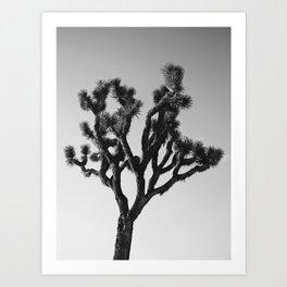 A Tree Named Josh Art Print