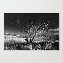 Frozen In Death Canvas Print