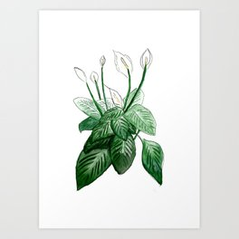 Peace Lily Art Print