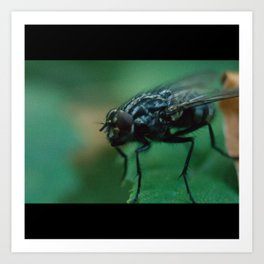 Fly With Bristles Art Print