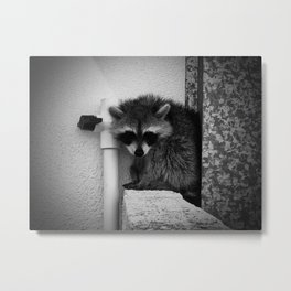 Raccoon Metal Print