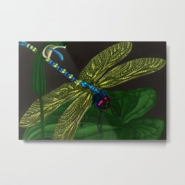 Dragonfly on a leaf by Jeanpaul Ferro based on b&w print by E.C. Escher Metal Print
