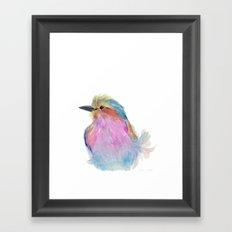 Lilac-breasted roller Framed Art Print