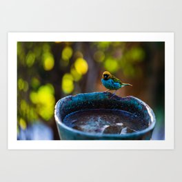 Tropical Bird and Bird Bath Art Print