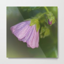 Malva With Morning Dew Metal Print