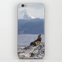 Sea lion near Ushuaia iPhone Skin