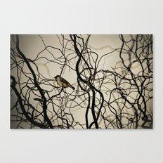 Lonely Bird... Canvas Print