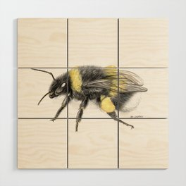 White-tailed bumblebee Wood Wall Art