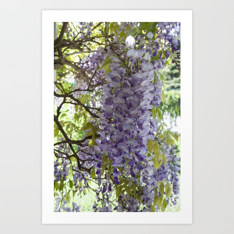 Wisteria Vine Art Print By Designsdeborah Society6