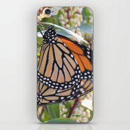 Monarch Mating iPhone Skin