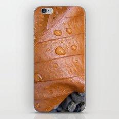 autumn leaf macro II iPhone & iPod Skin