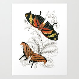 Scientific Colorful Butterfly Entomology Drawing Art Print