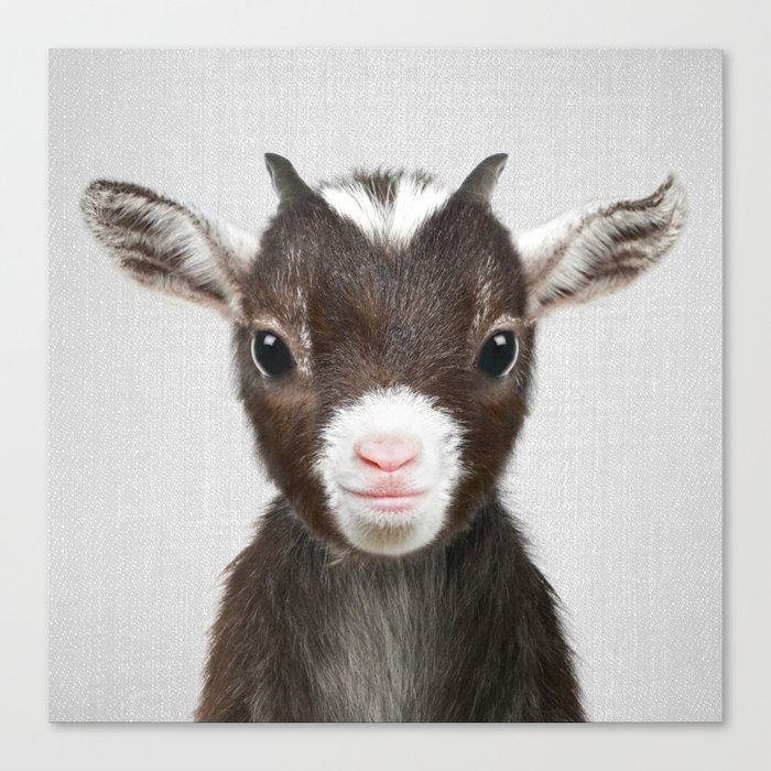 Baby Goat - Colorful Leinwanddruck