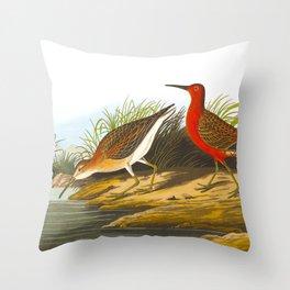 Pigmy Curlew Bird Throw Pillow