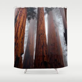 Tall Redwood Trees Shower Curtain