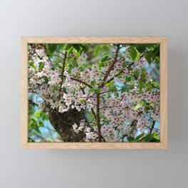 Cherry Blossom In The Spring Framed Mini Art Print