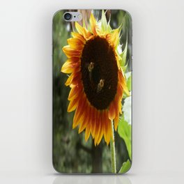 Sunflower Bloom & Bumble Bees iPhone Skin