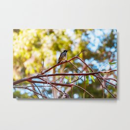 Go The Distance | New Holland Honeyeater Hero Metal Print