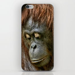 Orangutan iPhone Skin