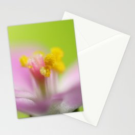4mm Stationery Cards