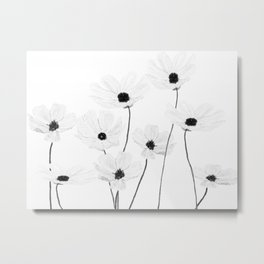 black and white cosmos Metal Print