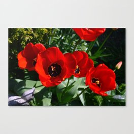 Late Spring Beauty Canvas Print